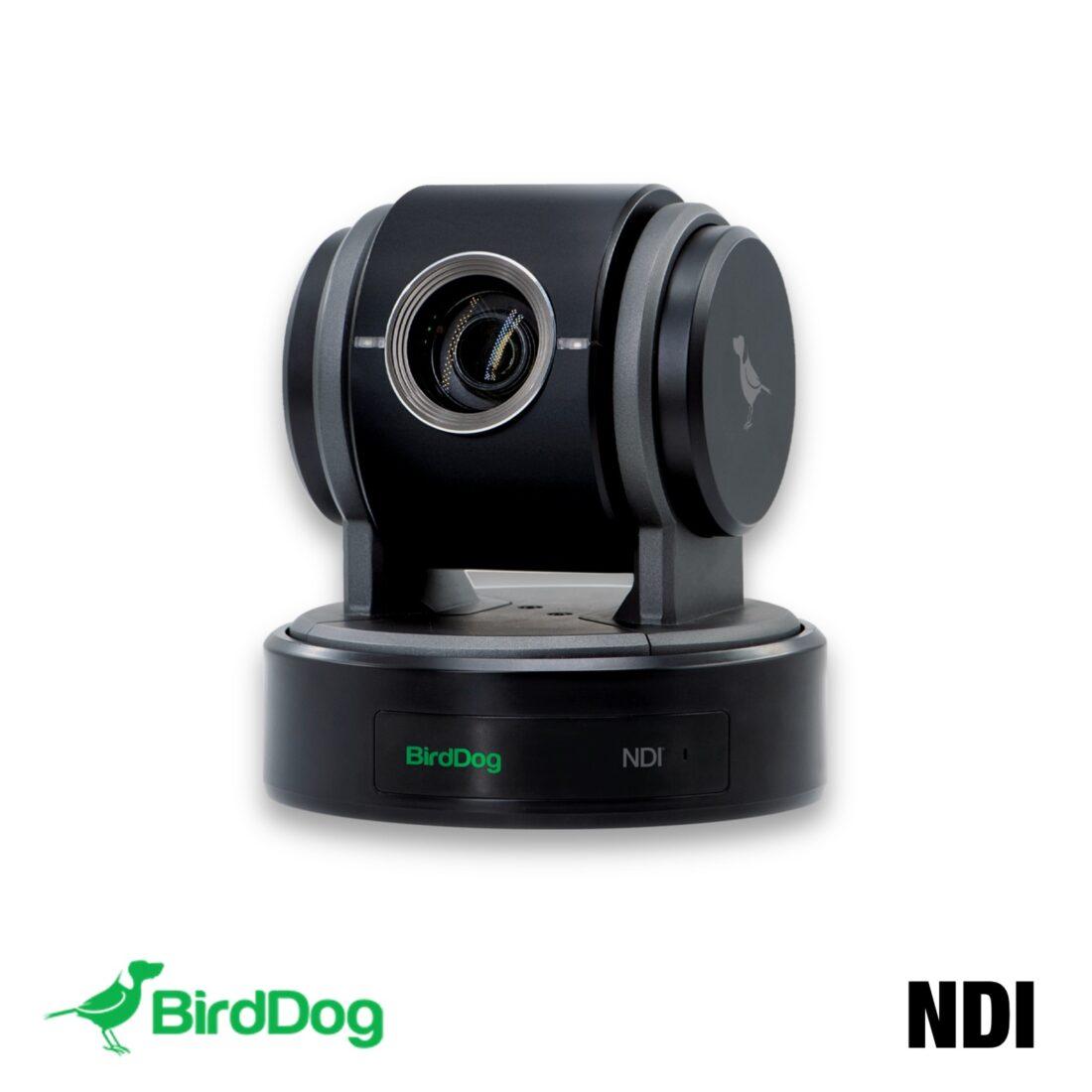 BirdDog P100B main